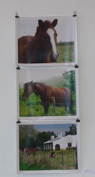 «MIRADAS DISONANTES» de «FOTOGRAFIA ARGENTINA CONTEMPORANEA» en Friburgo, Alemania; 2012